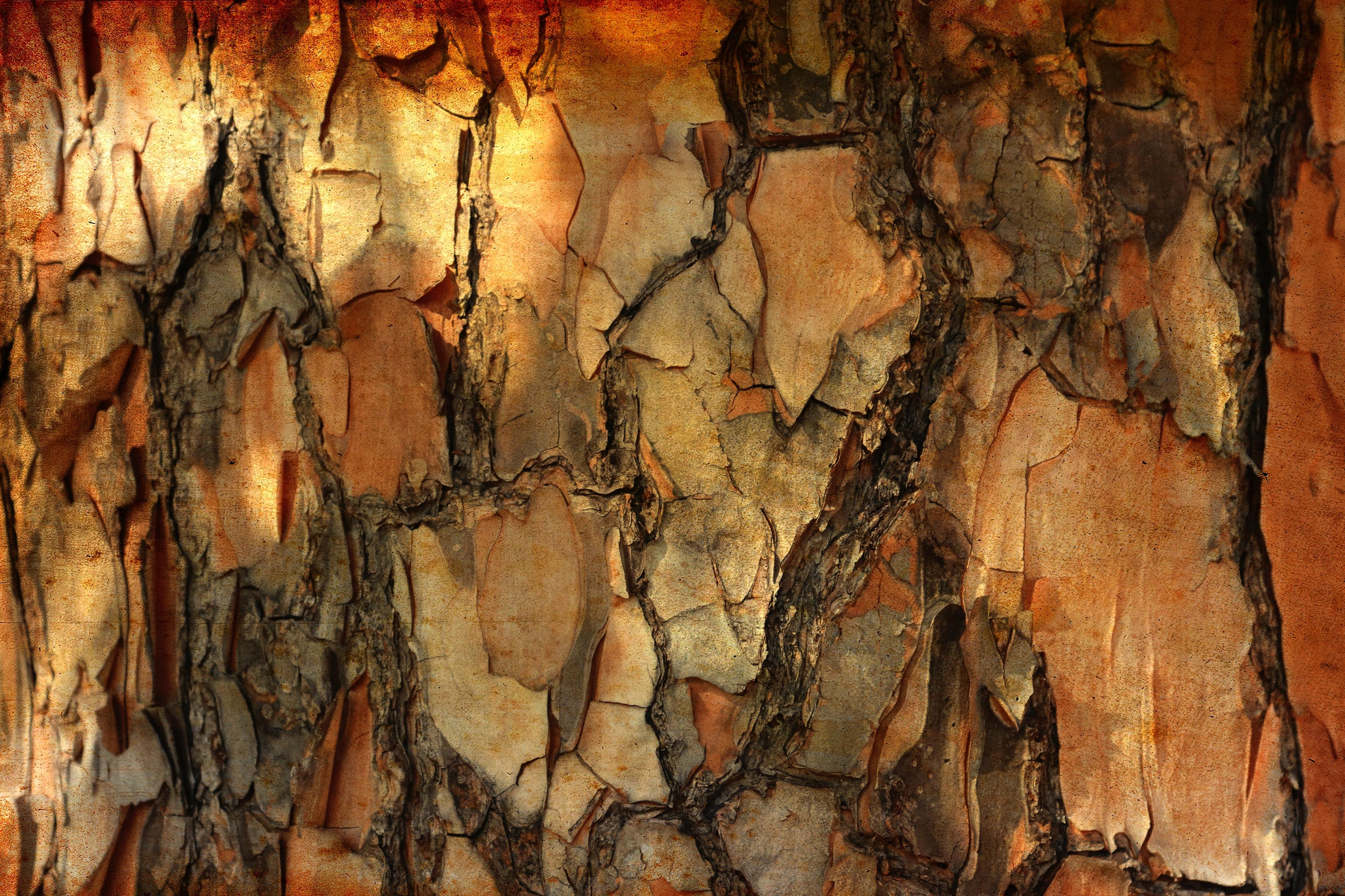 58972 Protetores de tela e papéis de parede Texturas em seu telefone. Baixe Texturas, Pinho, Macro, Madeira, Árvore, Textura, Pinheiro, Latido, Casca fotos gratuitamente