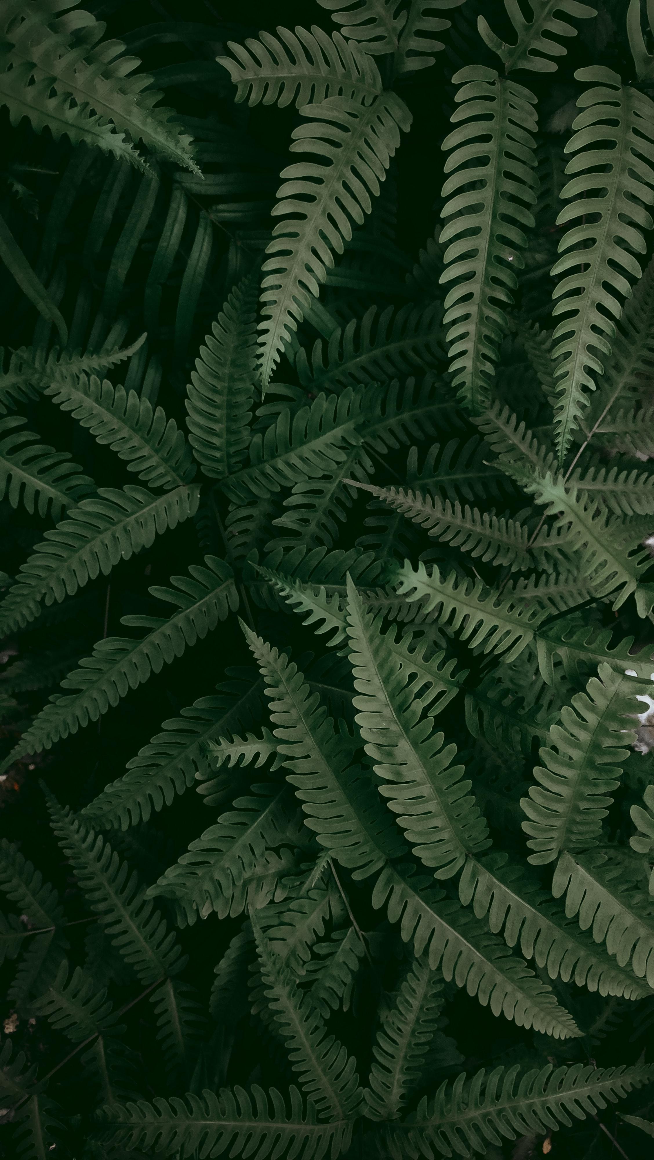 134502 скачать обои Макро, Папоротник, Растение, Листья, Зеленый - заставки и картинки бесплатно