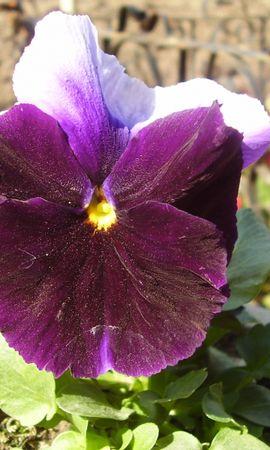 7155 скачать обои Растения, Цветы - заставки и картинки бесплатно