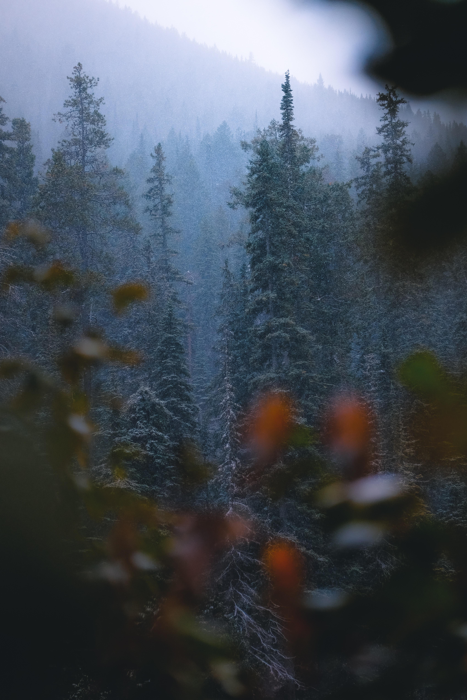 56096 скачать обои Природа, Лес, Деревья, Снег, Снегопад, Сосны - заставки и картинки бесплатно