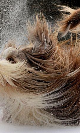 41148 baixar papel de parede Animais, Cães - protetores de tela e imagens gratuitamente