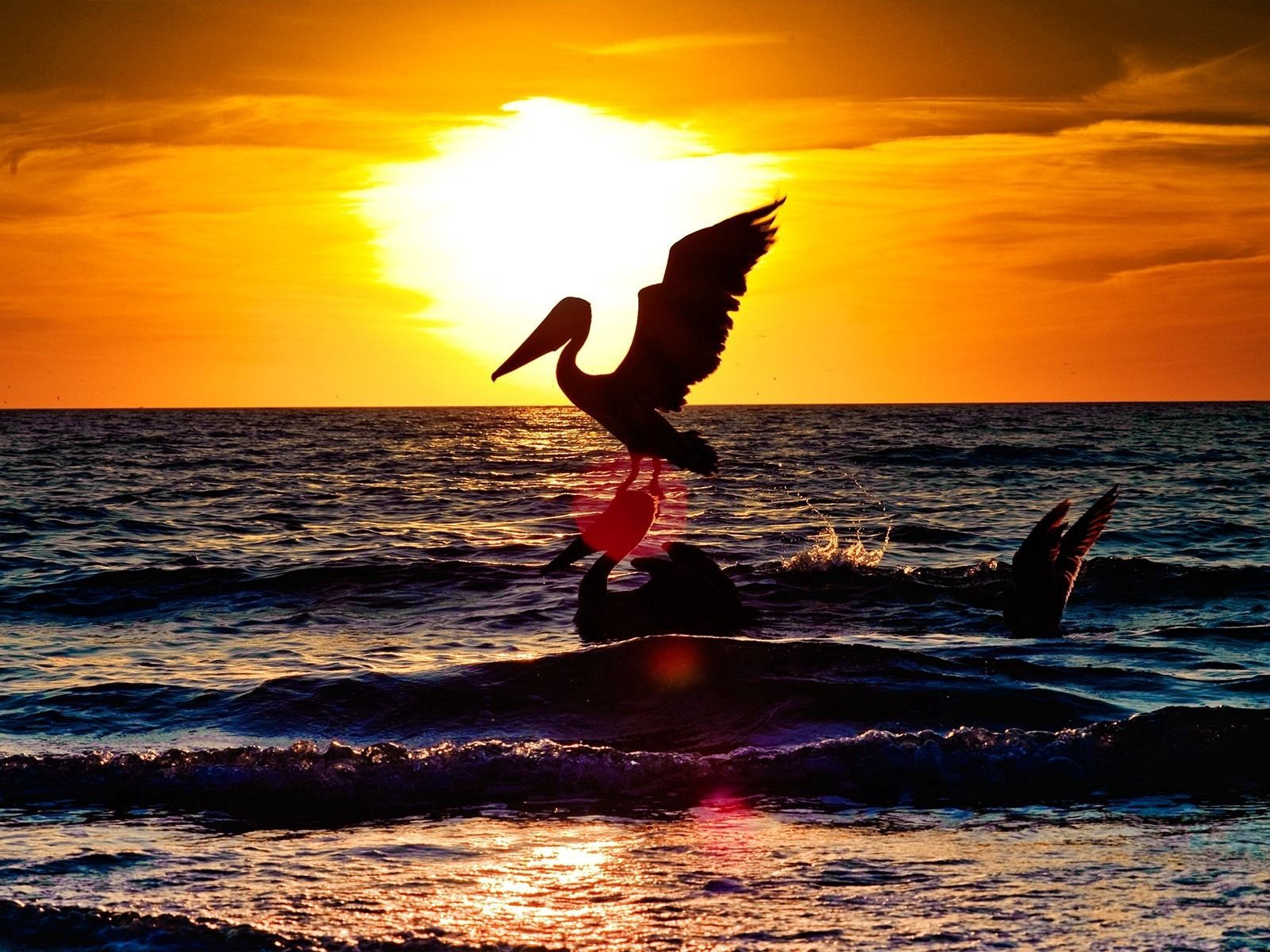 61060 download wallpaper Animals, Pelican, Bird, Flight, Night, Silhouette, Sea, Sunset screensavers and pictures for free