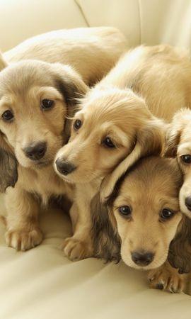 39880 baixar papel de parede Animais, Cães - protetores de tela e imagens gratuitamente