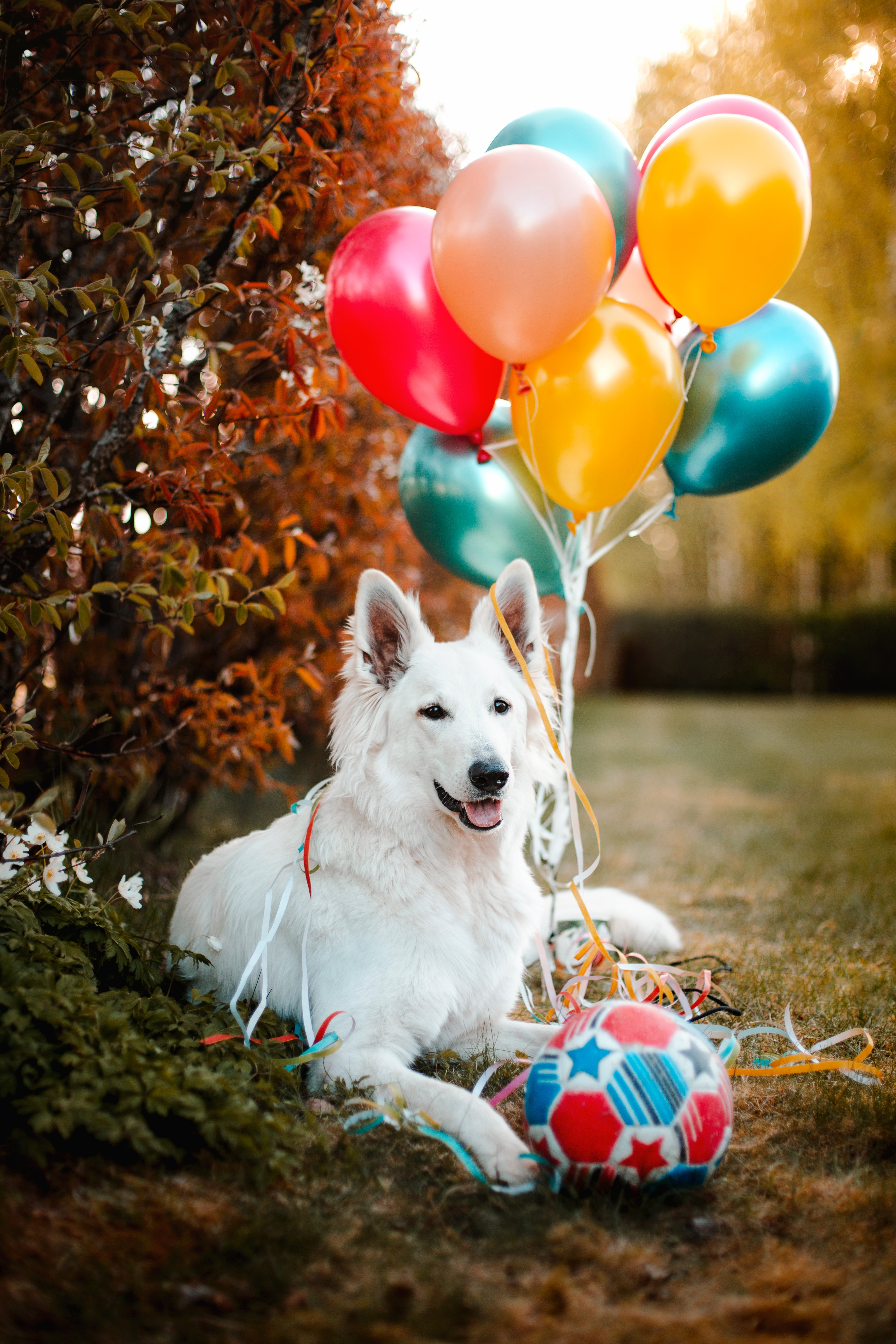 143097 Screensavers and Wallpapers Balloons for phone. Download Animals, Balloons, Dog, Pet, Ball, Animal, Air Balloons pictures for free