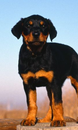 9476 download wallpaper Animals, Dogs screensavers and pictures for free