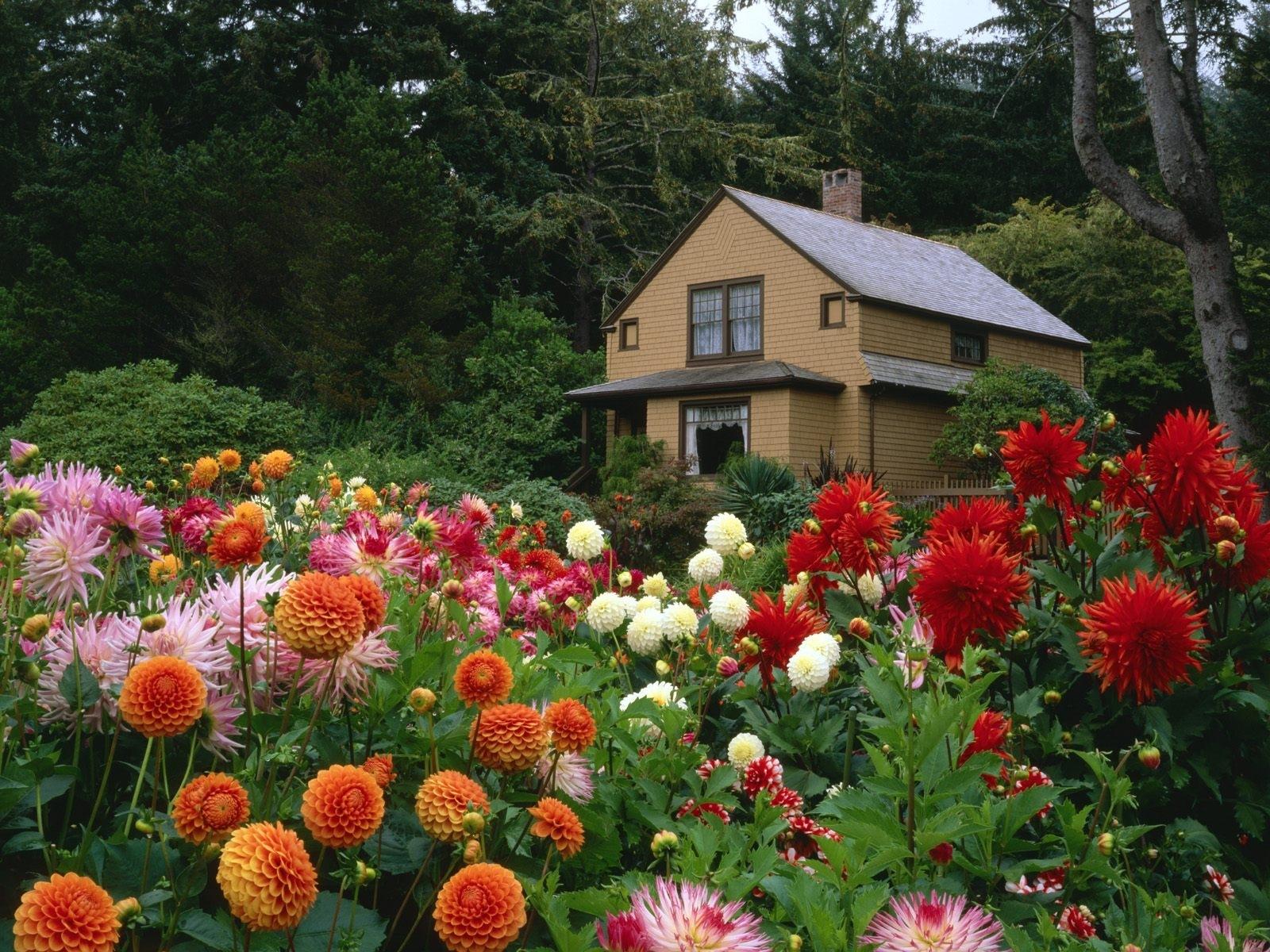 7260 скачать обои Дома, Растения, Пейзаж, Цветы - заставки и картинки бесплатно