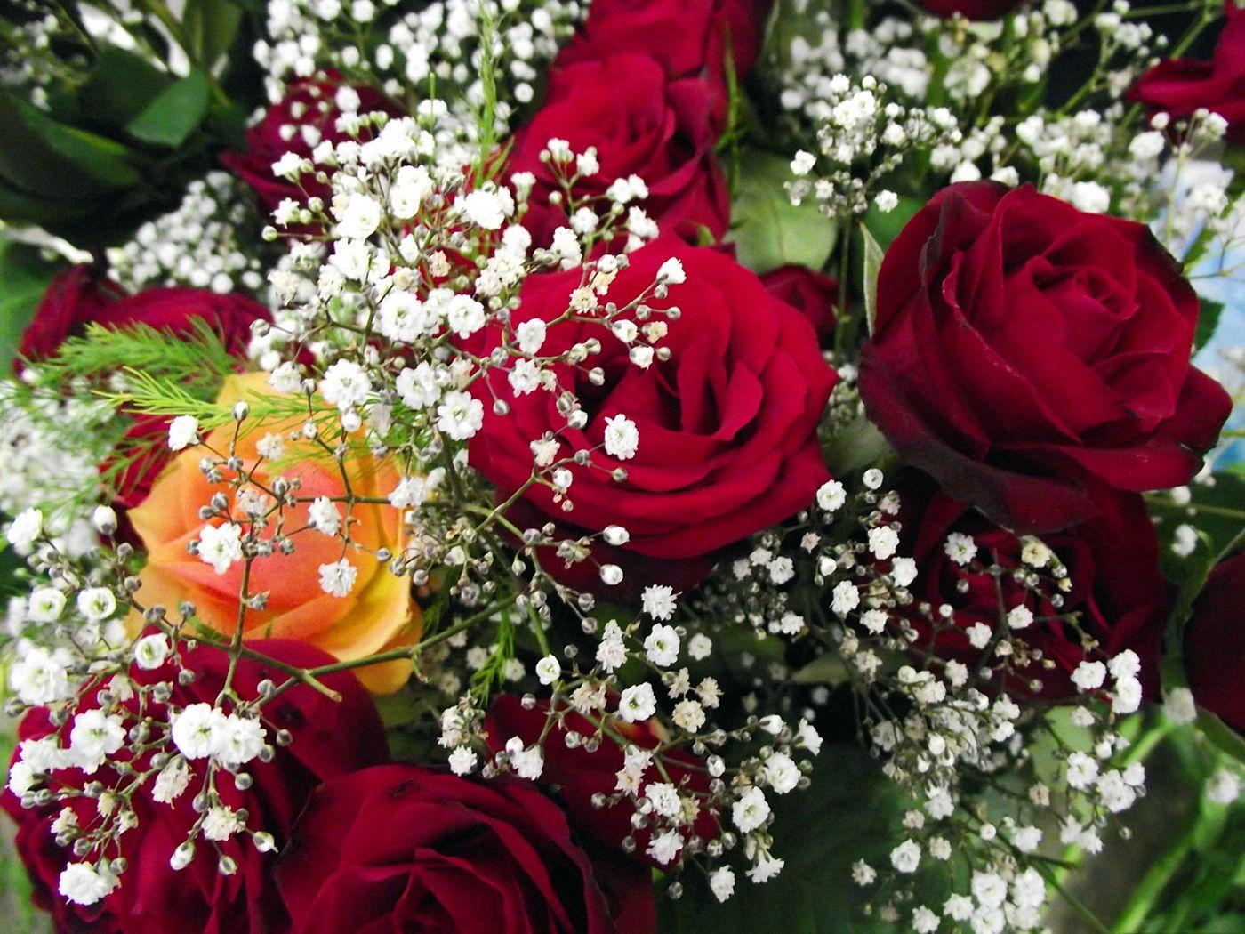 79484 скачать обои Цветы, Букет, Гипсофил, Крупный План, Розы - заставки и картинки бесплатно