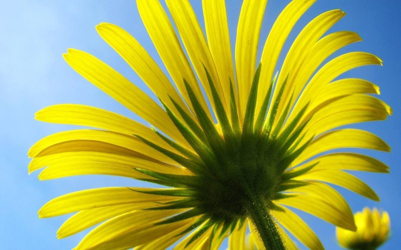 5121 скачать обои Растения, Цветы - заставки и картинки бесплатно