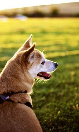 46867 baixar papel de parede Animais, Cães - protetores de tela e imagens gratuitamente
