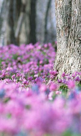 46782 baixar papel de parede Plantas, Paisagem, Flores, Violeta - protetores de tela e imagens gratuitamente