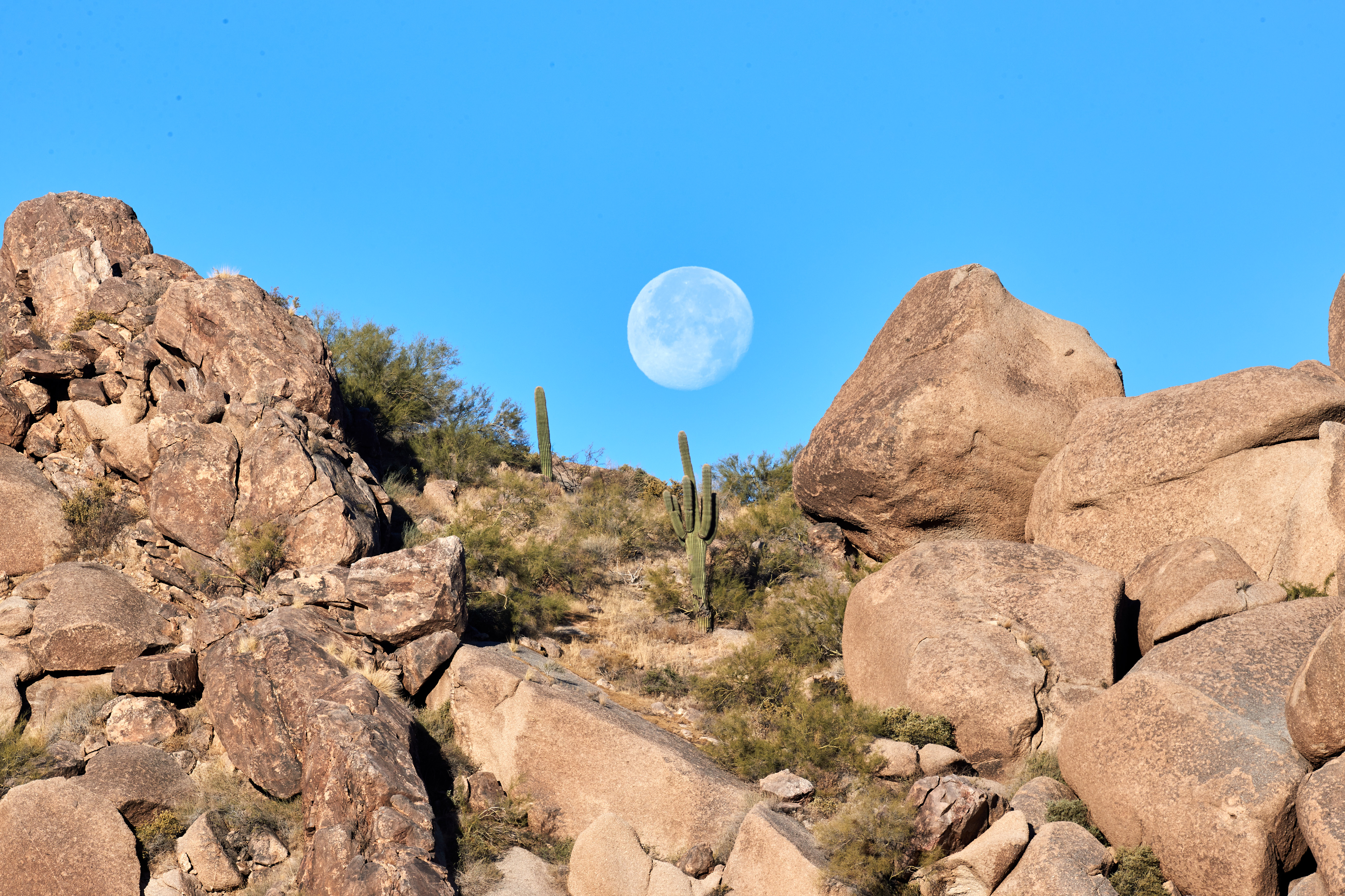 91575 免費下載壁紙 性质, 石头, 岩石, 月球, 景观, 仙人掌 屏保和圖片