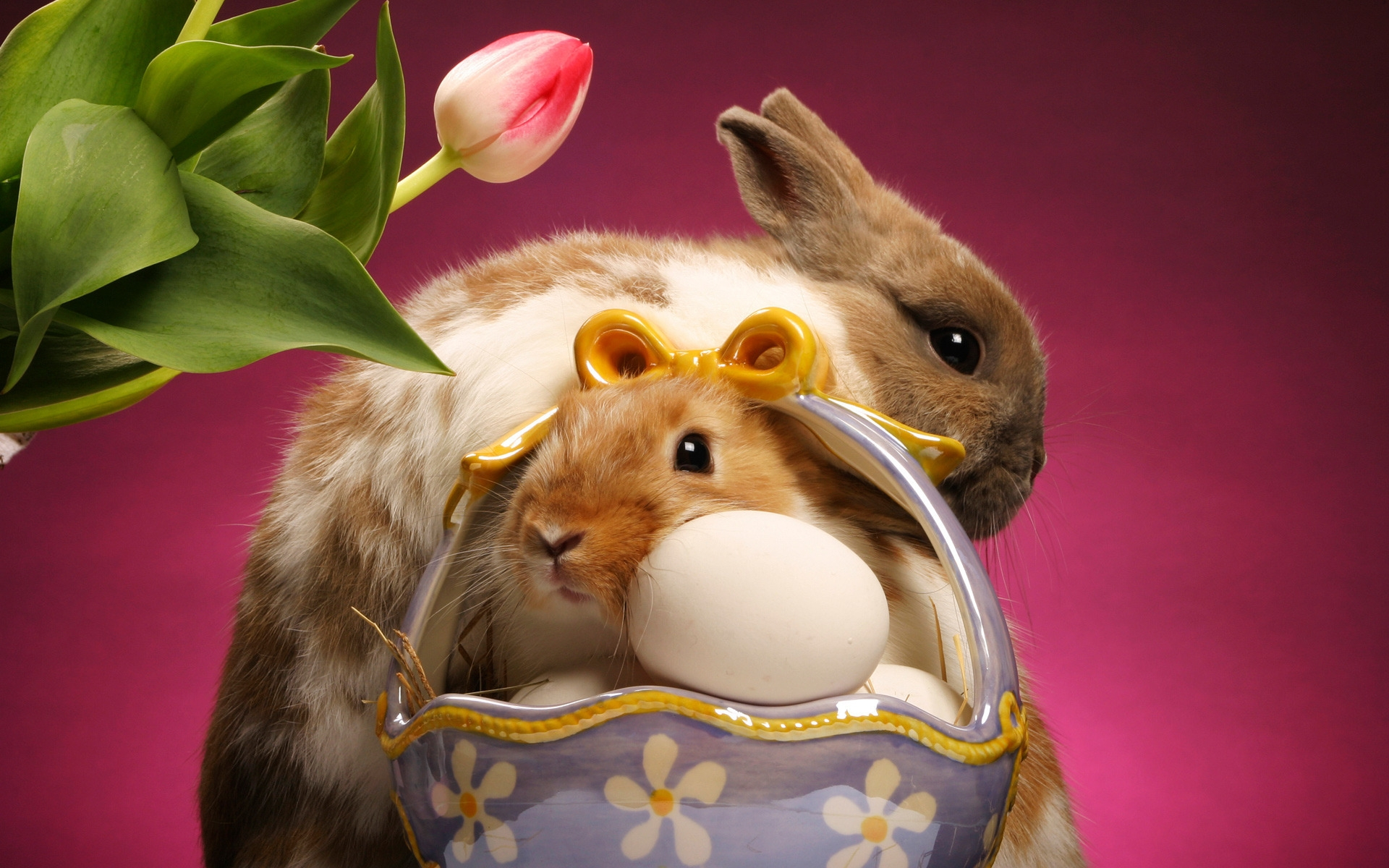 34641 download wallpaper Animals, Rabbits screensavers and pictures for free