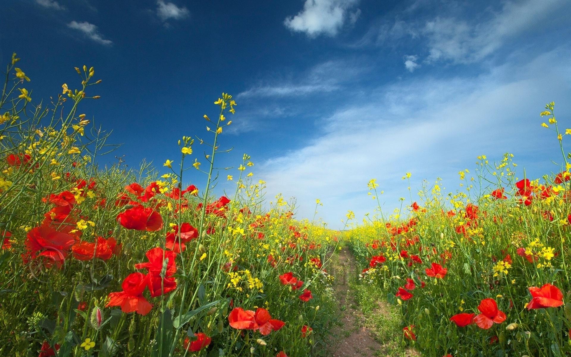 47788 скачать обои Растения, Пейзаж, Природа, Цветы, Поля - заставки и картинки бесплатно