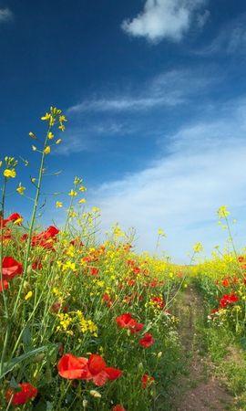47788 descargar fondo de pantalla Plantas, Paisaje, Naturaleza, Flores, Los Campos: protectores de pantalla e imágenes gratis