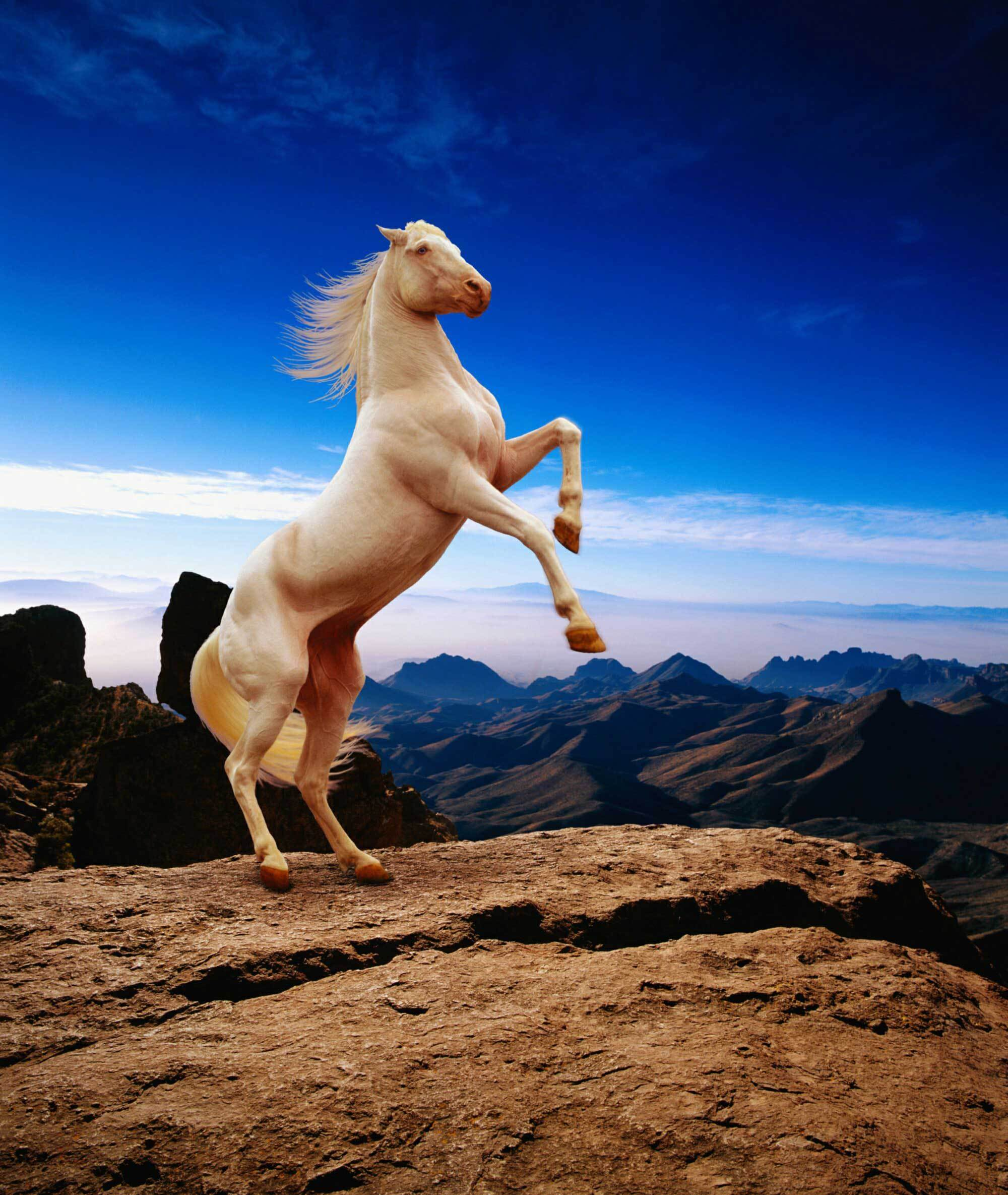 10496 download wallpaper Animals, Horses screensavers and pictures for free