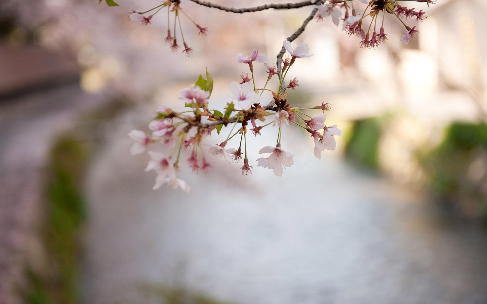 21322 скачать обои Растения, Цветы - заставки и картинки бесплатно