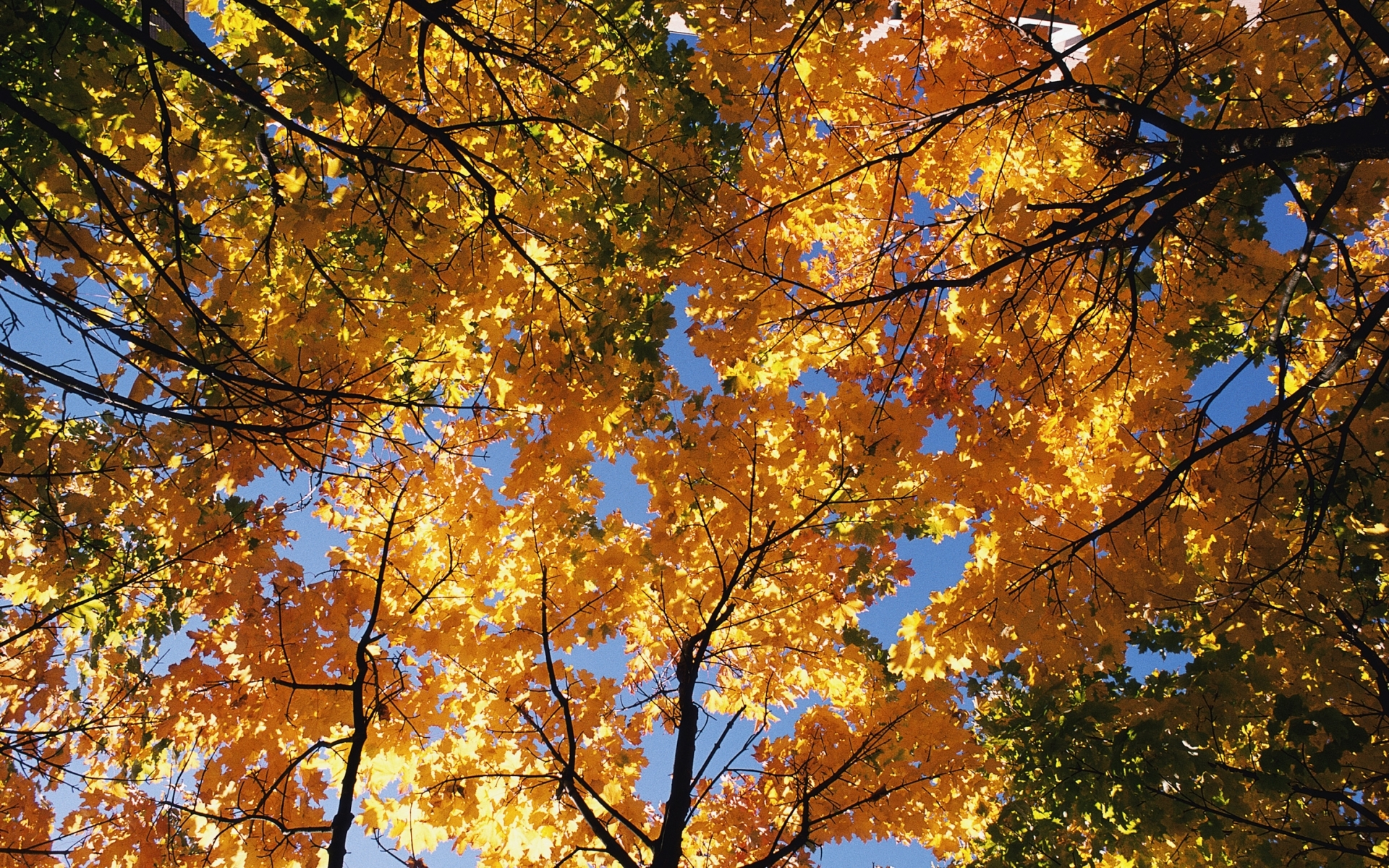 1600 download wallpaper Landscape, Trees, Autumn screensavers and pictures for free