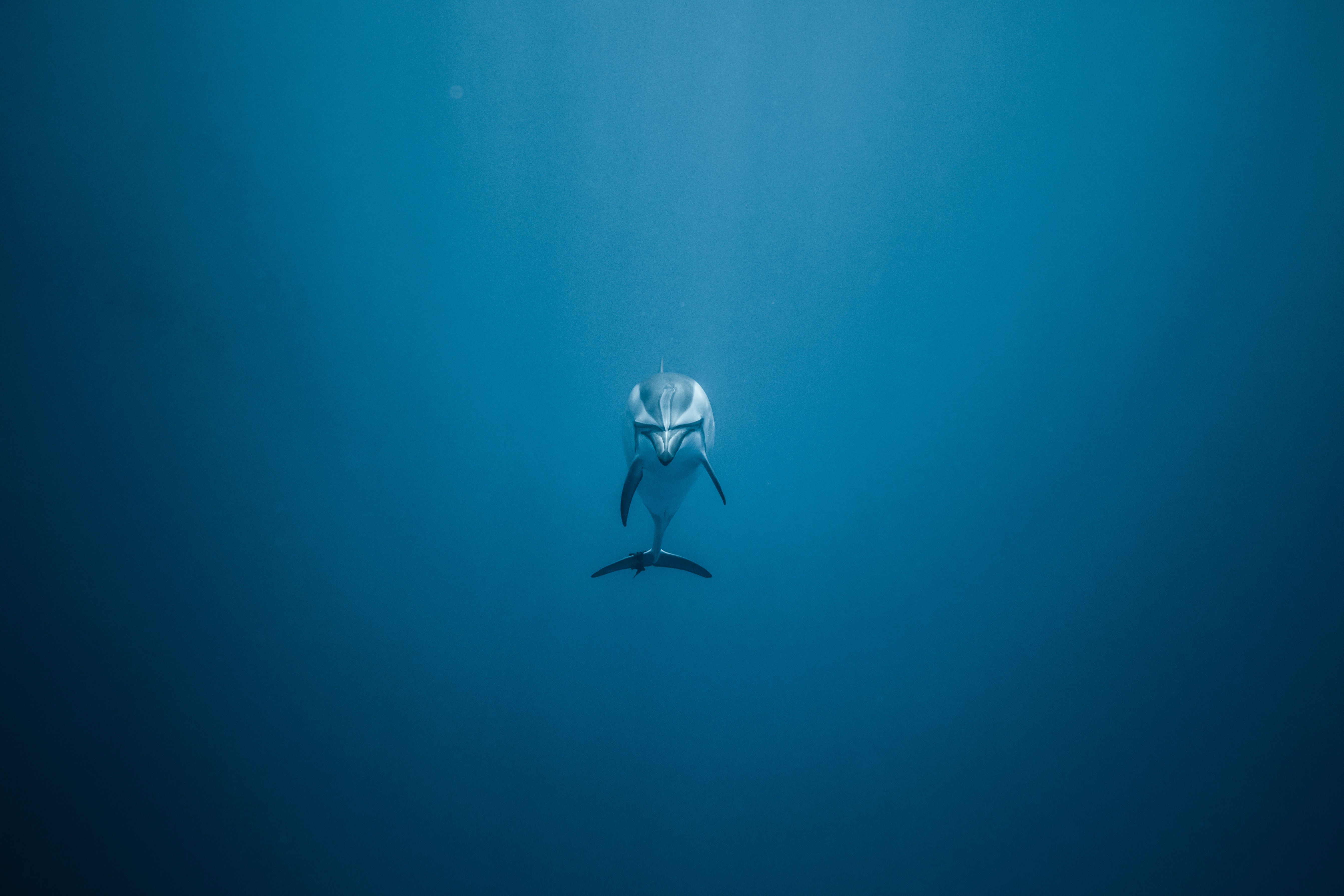56101 download wallpaper Animals, Dolphin, Underwater World, To Swim, Swim, Alone, Lonely screensavers and pictures for free