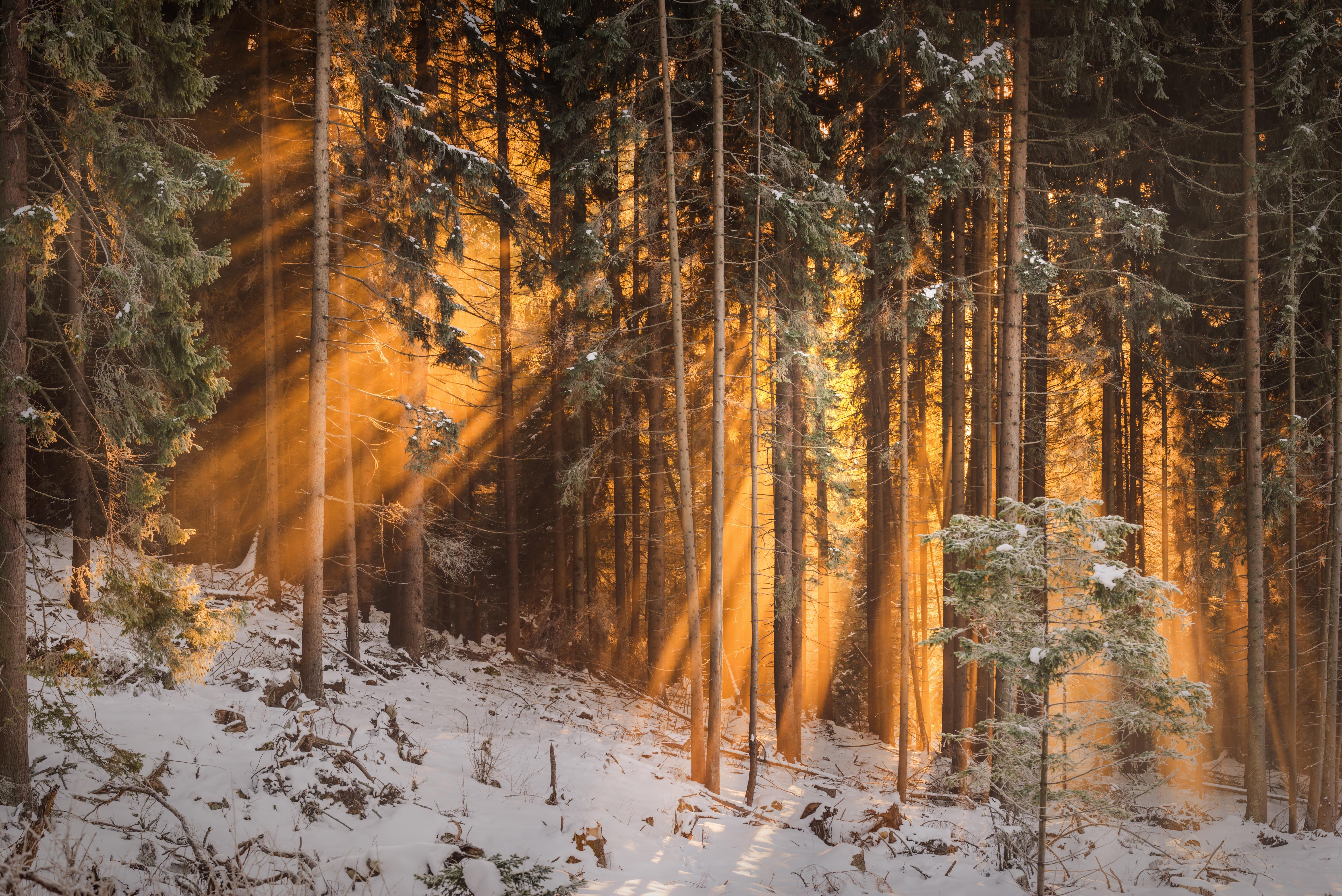 107961 Hintergrundbild herunterladen Wald, Bäume, Winterreifen, Natur, Sonnenlicht - Bildschirmschoner und Bilder kostenlos