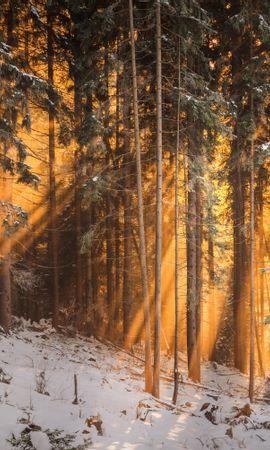 107961 скачать обои Природа, Лес, Зима, Деревья, Солнечный Свет - заставки и картинки бесплатно