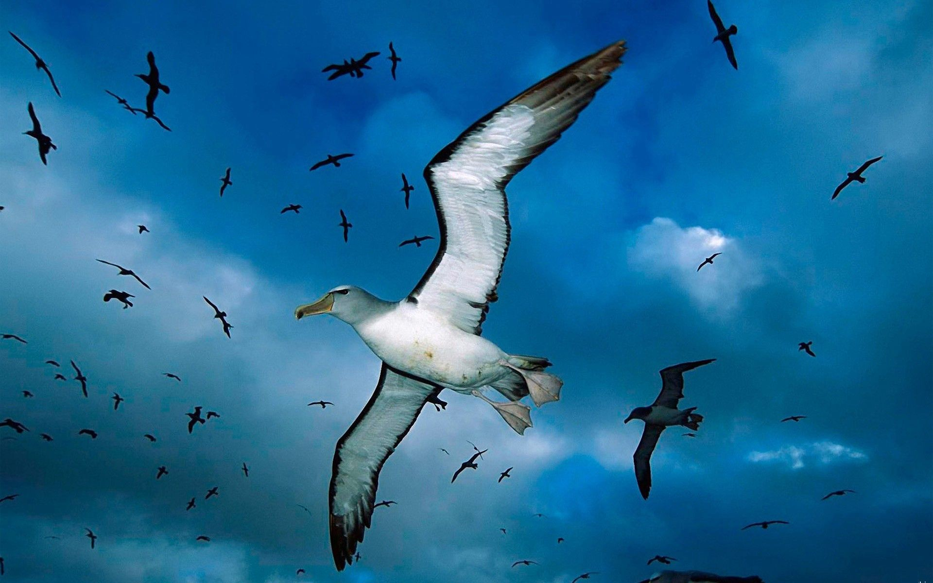 142072 download wallpaper Animals, Flock, Sky, Clouds, Sea, Birds, Seagulls screensavers and pictures for free
