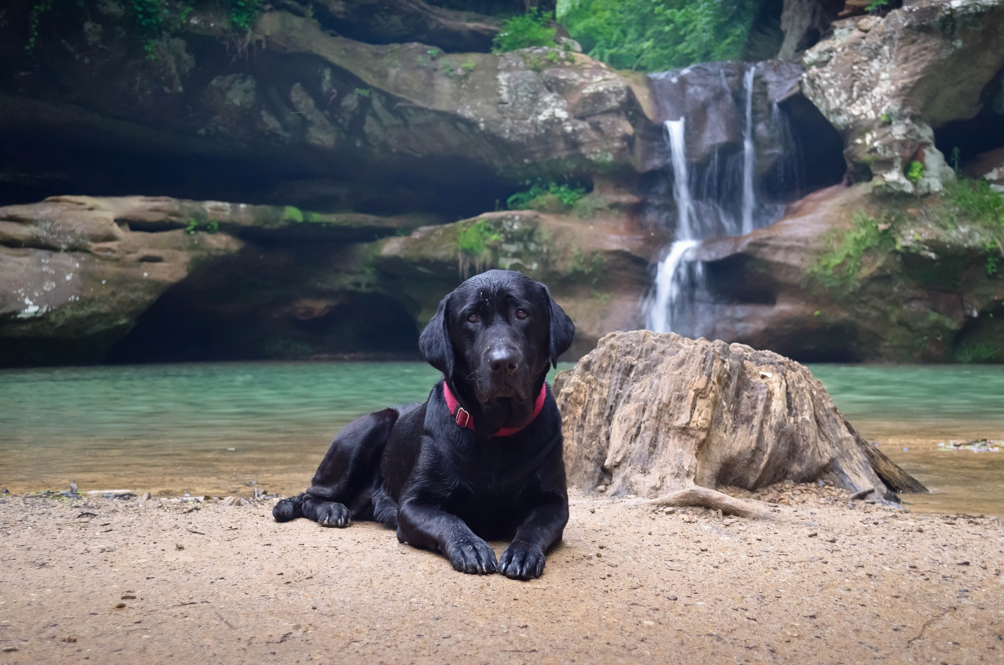 118842 download wallpaper Animals, Dog, Labrador, To Lie Down, Lie, Sand, Waterfall screensavers and pictures for free