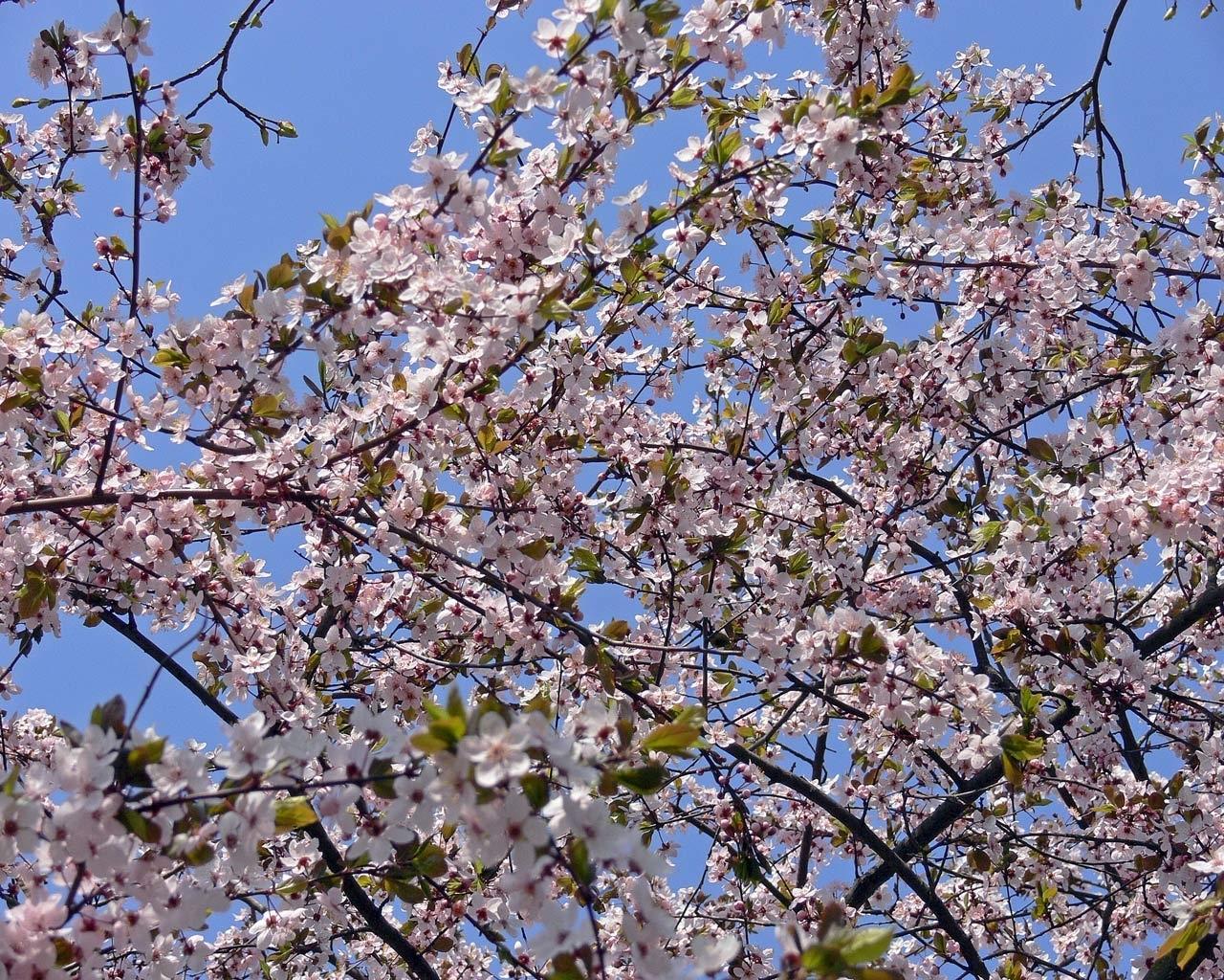 6753 скачать обои Растения, Цветы - заставки и картинки бесплатно