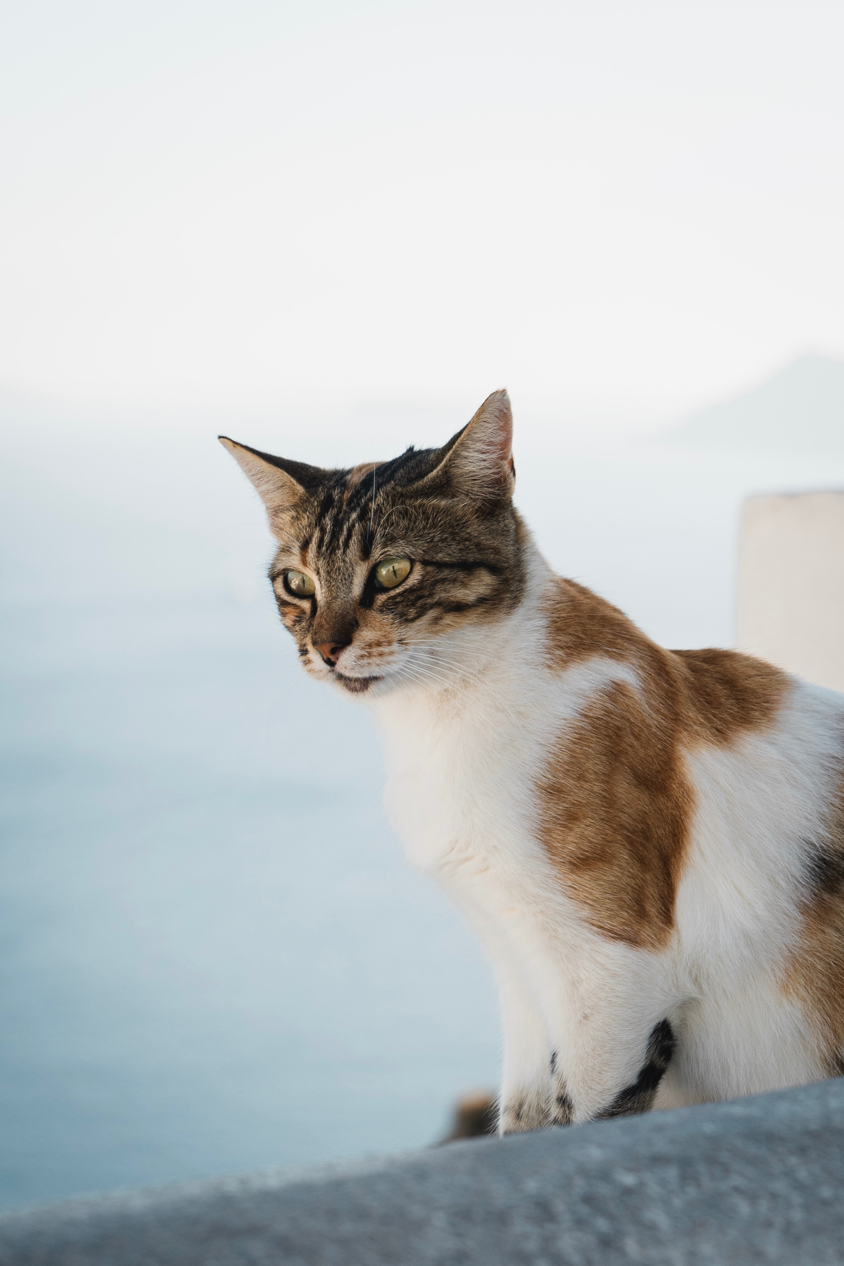 137656 download wallpaper Animals, Cat, Sight, Opinion, Pet, Animal, Spotted, Spotty screensavers and pictures for free