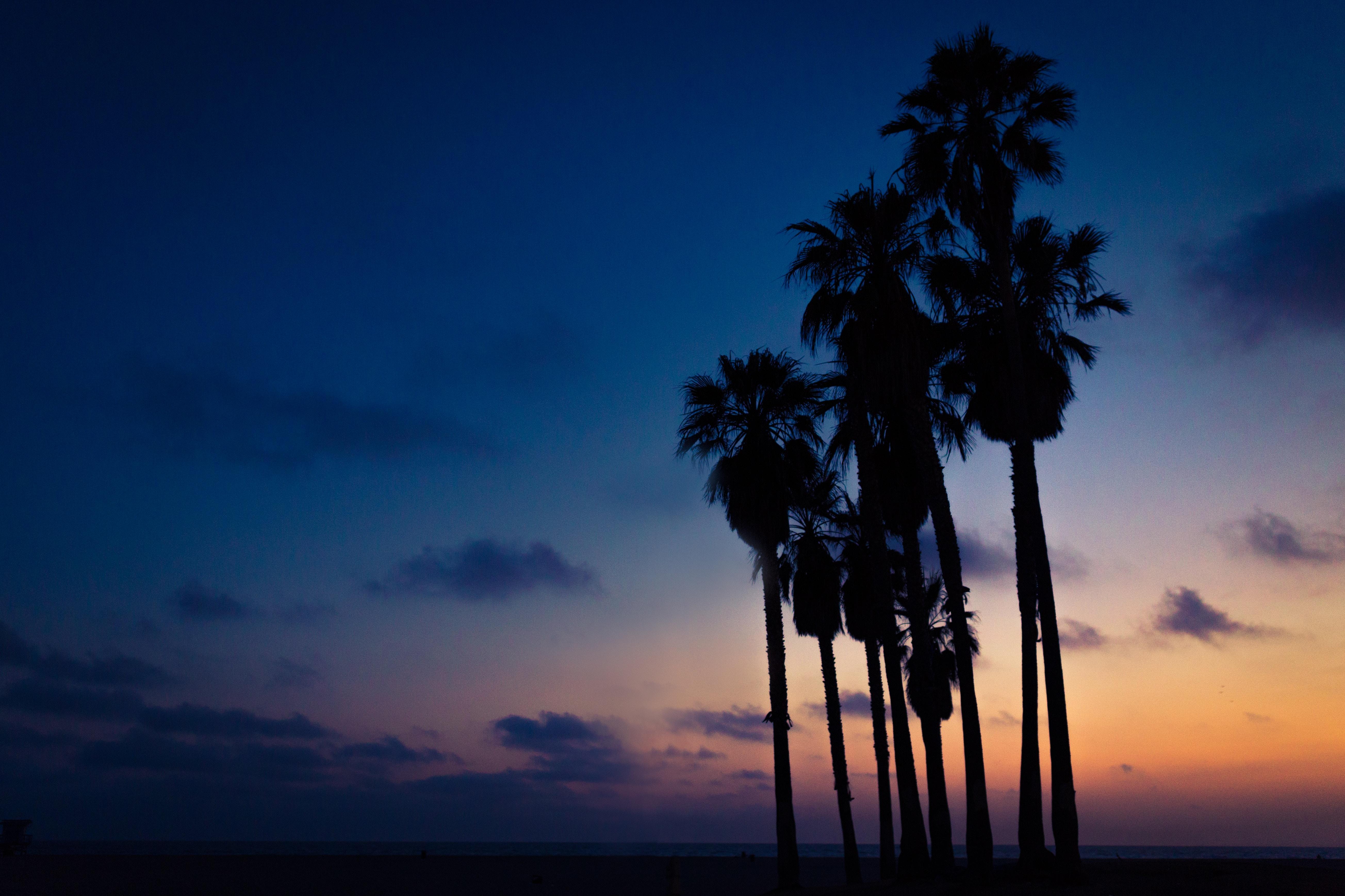 104773 免費下載壁紙 黑暗的, 黑暗, 夜, 天空, 棕榈 屏保和圖片