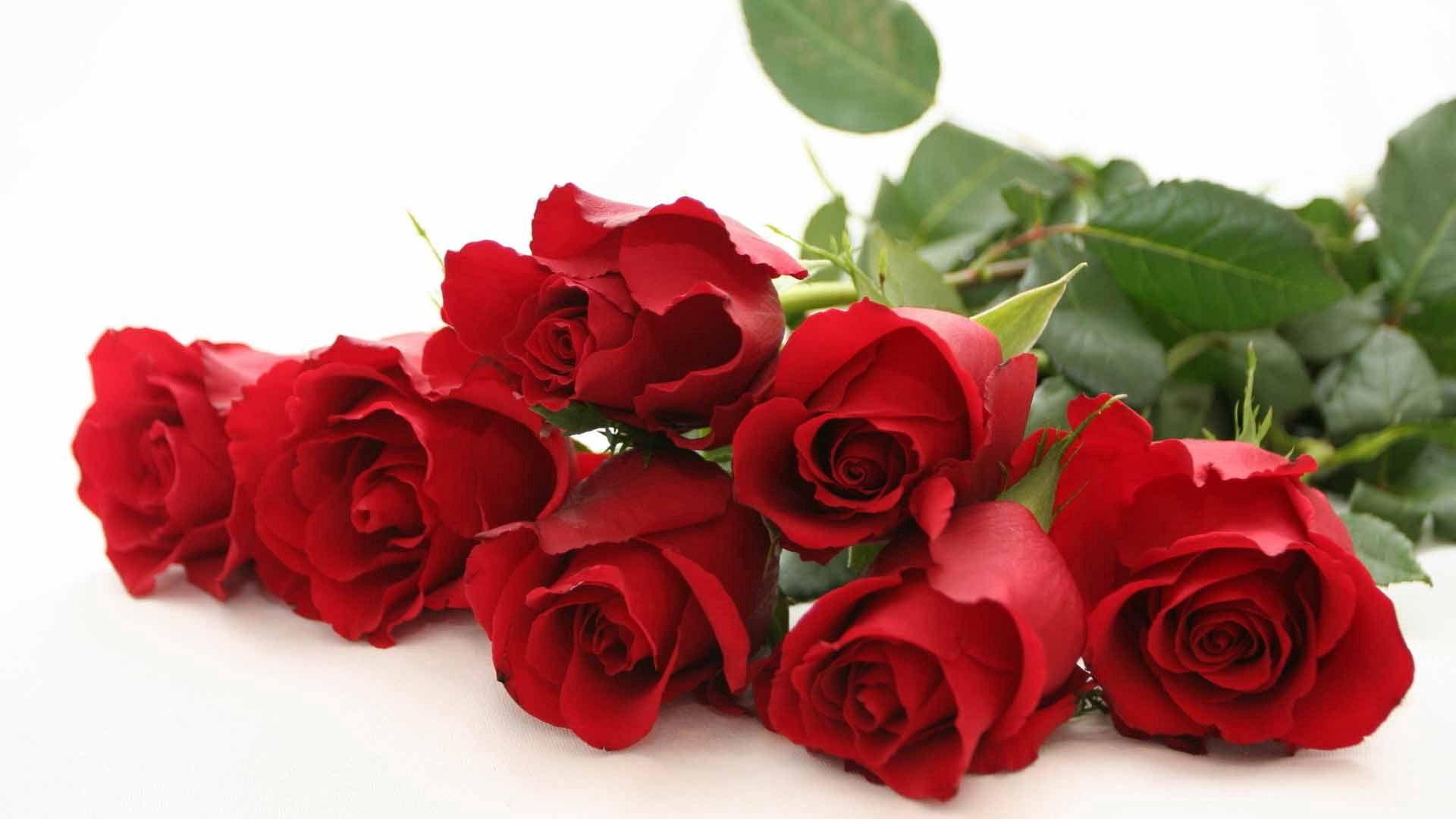96667 Заставки и Обои Розы на телефон. Скачать Цветы, Розы, Листья, Бутоны, Алые картинки бесплатно