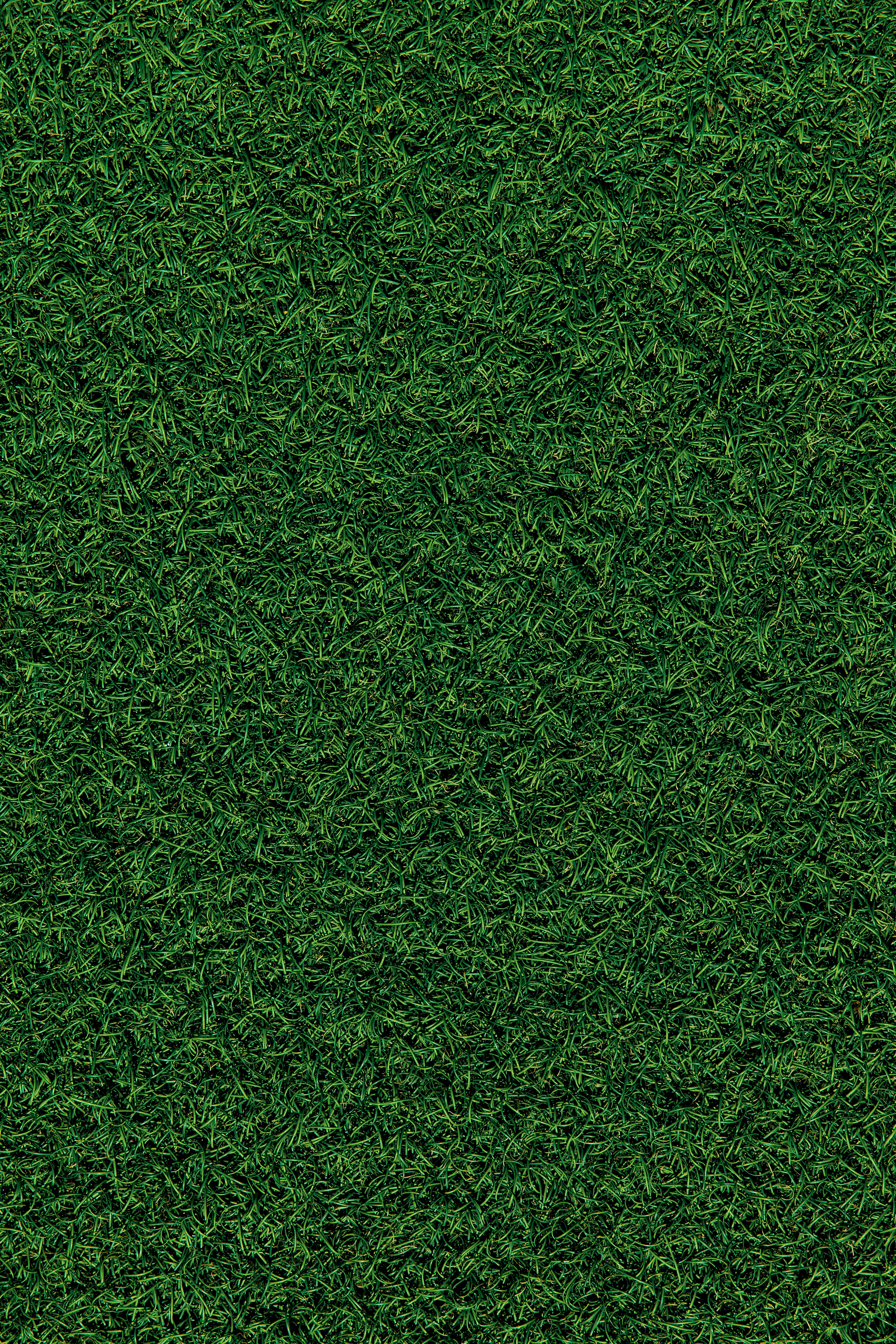116849 free download Green wallpapers for phone, Nature, Grass, Field, Coating, Covering Green images and screensavers for mobile