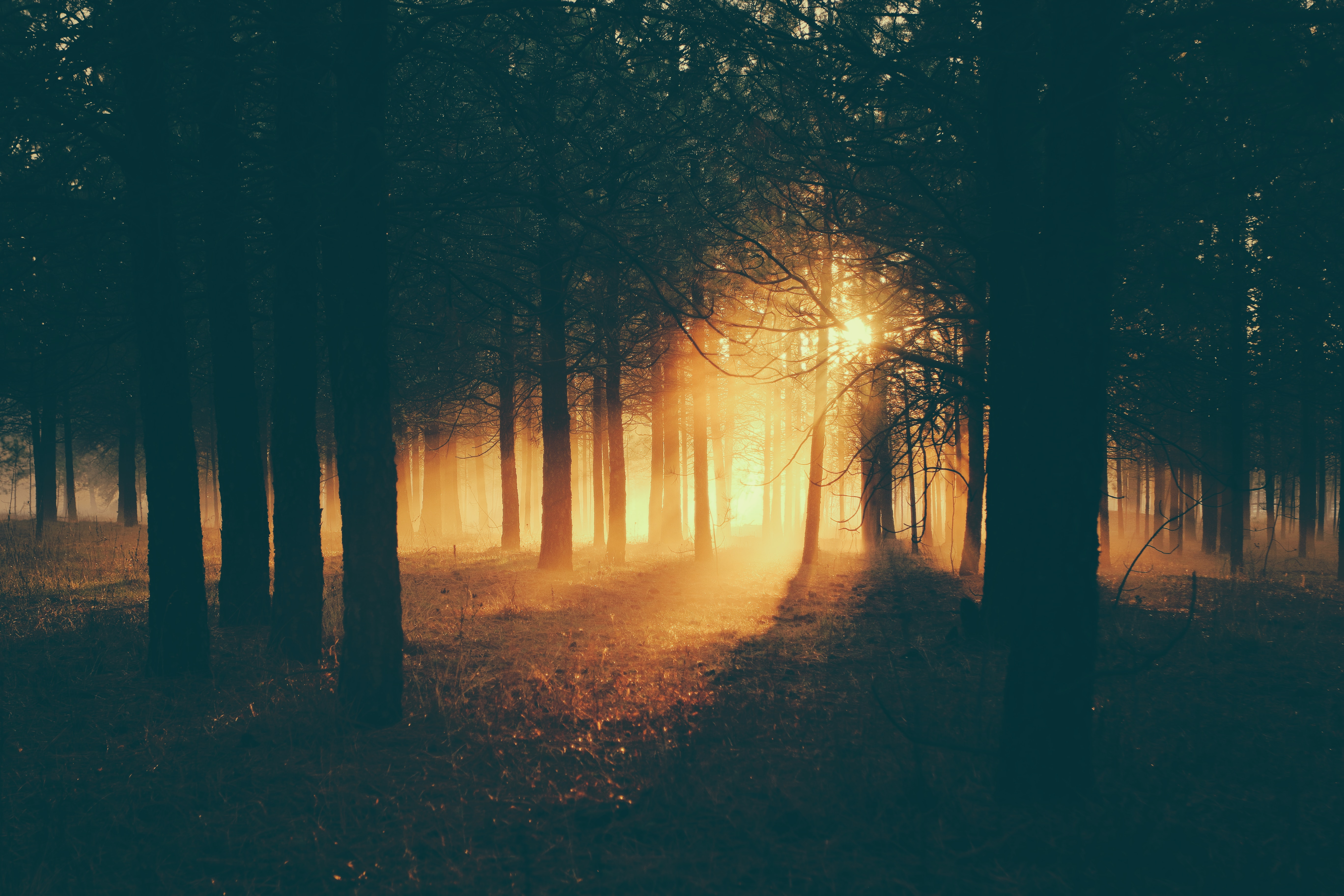 130085 Screensavers and Wallpapers Twilight for phone. Download Twilight, Dark, Forest, Fog, Dusk, Sunlight pictures for free