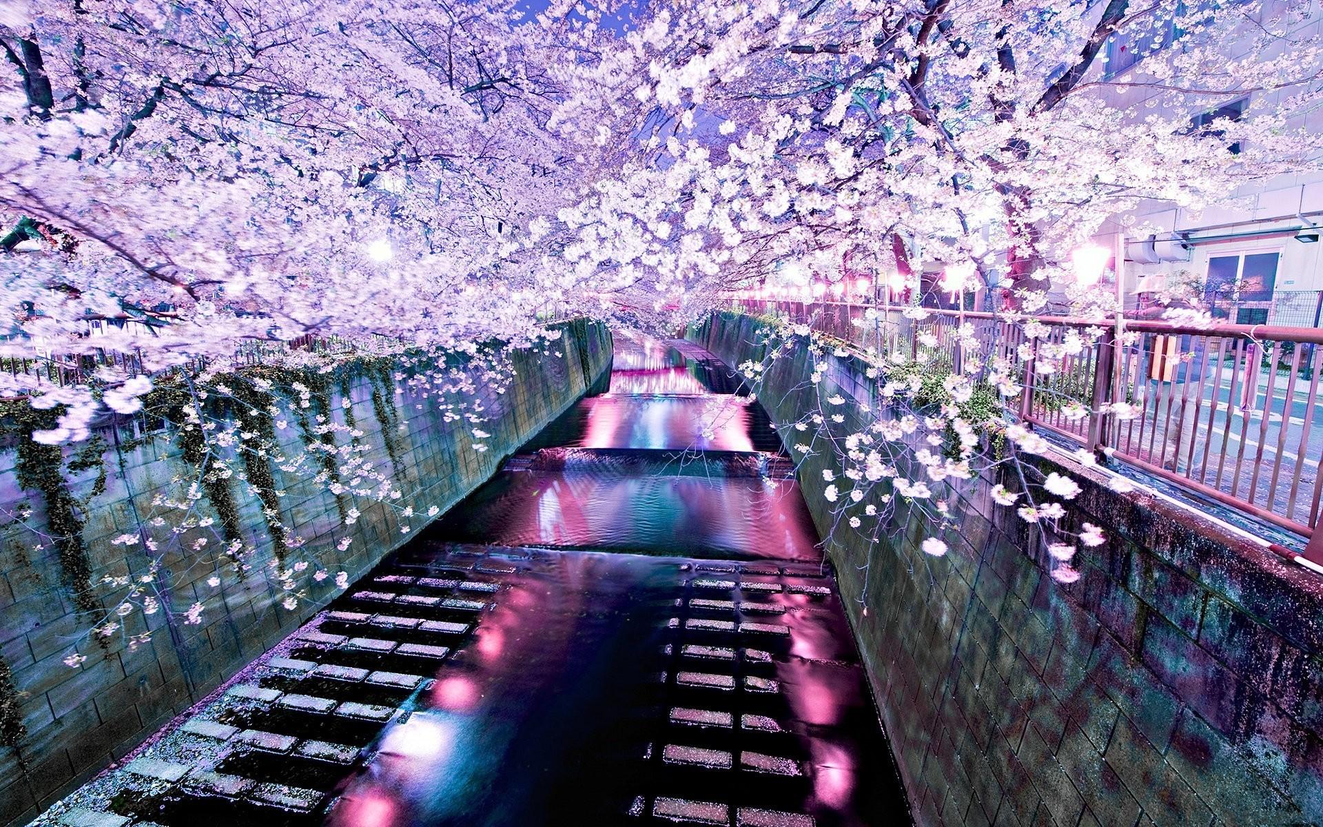 20338 Заставки и Обои Сакура на телефон. Скачать Сакура, Пейзаж, Река, Азия картинки бесплатно