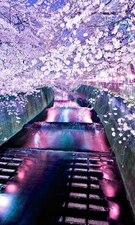 20338 descargar fondo de pantalla Paisaje, Ríos, Asia, Sakura: protectores de pantalla e imágenes gratis