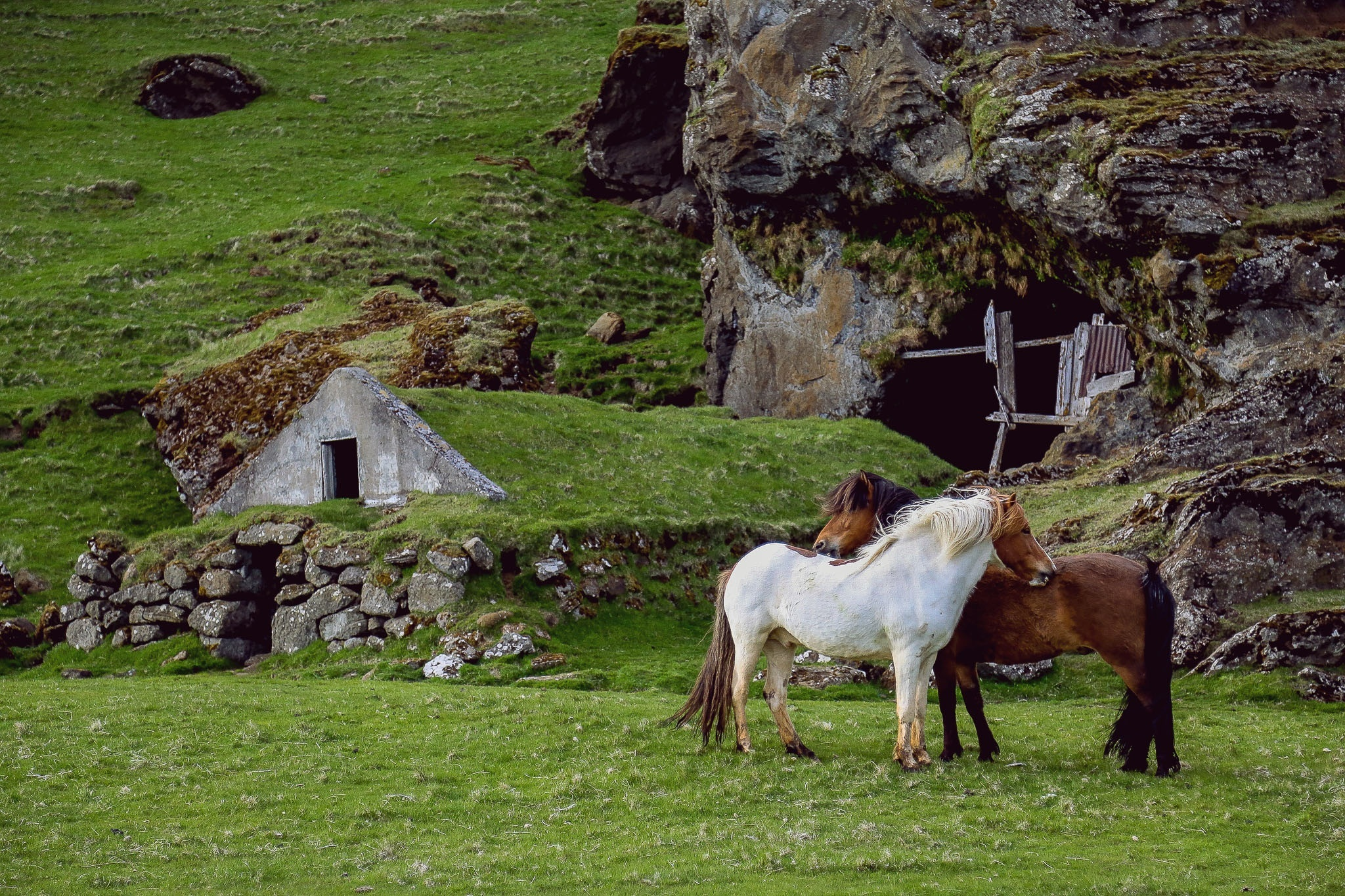 70542 download wallpaper Animals, Horses, Pasture, Farm, Grass, Structure screensavers and pictures for free