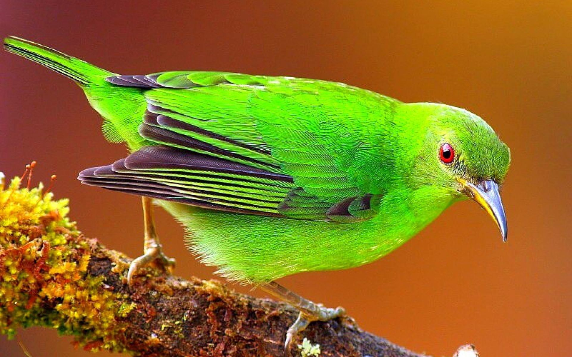 133554 Screensavers and Wallpapers Sit for phone. Download Animals, Bright, Bird, Sit, Branch, Color pictures for free