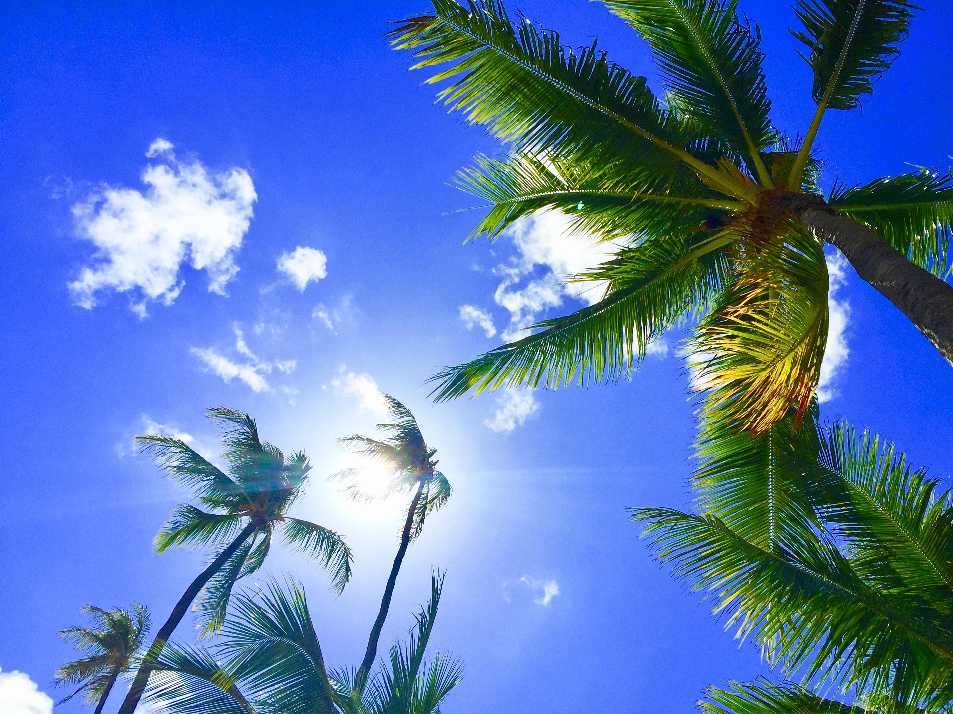 154267 économiseurs d'écran et fonds d'écran Nature sur votre téléphone. Téléchargez Nature, Sky, Palms, Tropiques, Hawaii, Hawaï, Aloha images gratuitement