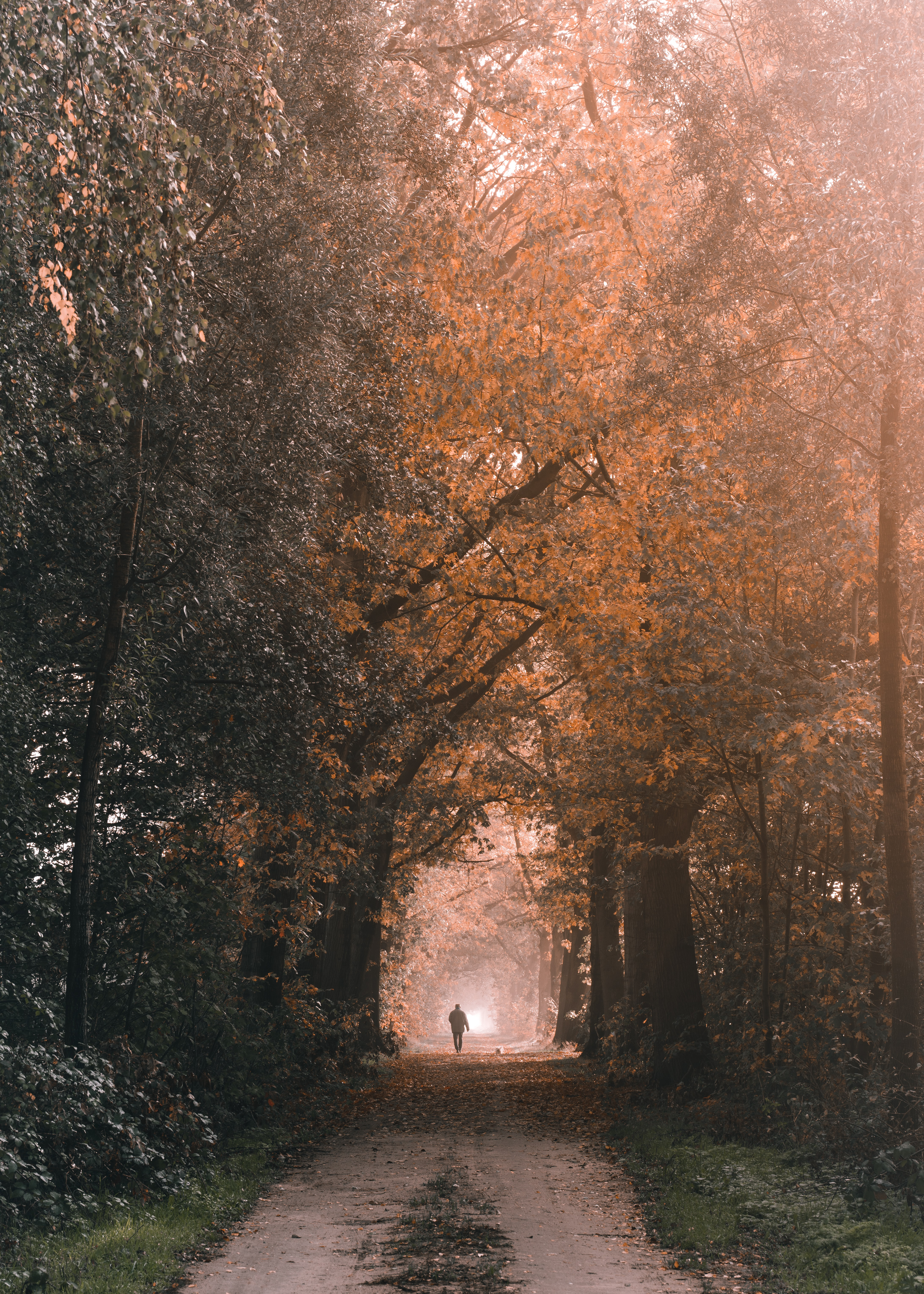 94702 download wallpaper Miscellanea, Miscellaneous, Silhouette, Loneliness, Track, Trees, Nature screensavers and pictures for free