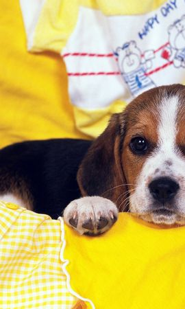19214 download wallpaper Animals, Dogs screensavers and pictures for free