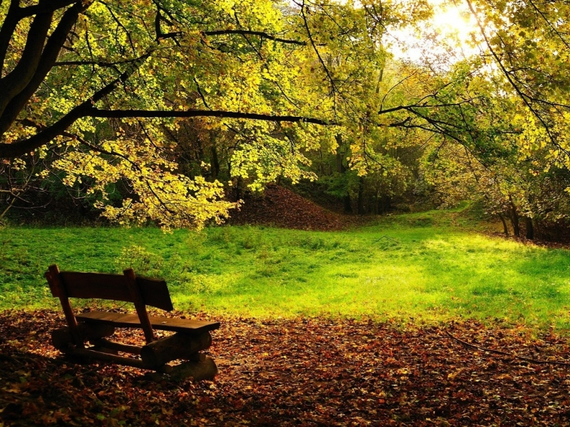 34788 download wallpaper Landscape, Autumn screensavers and pictures for free