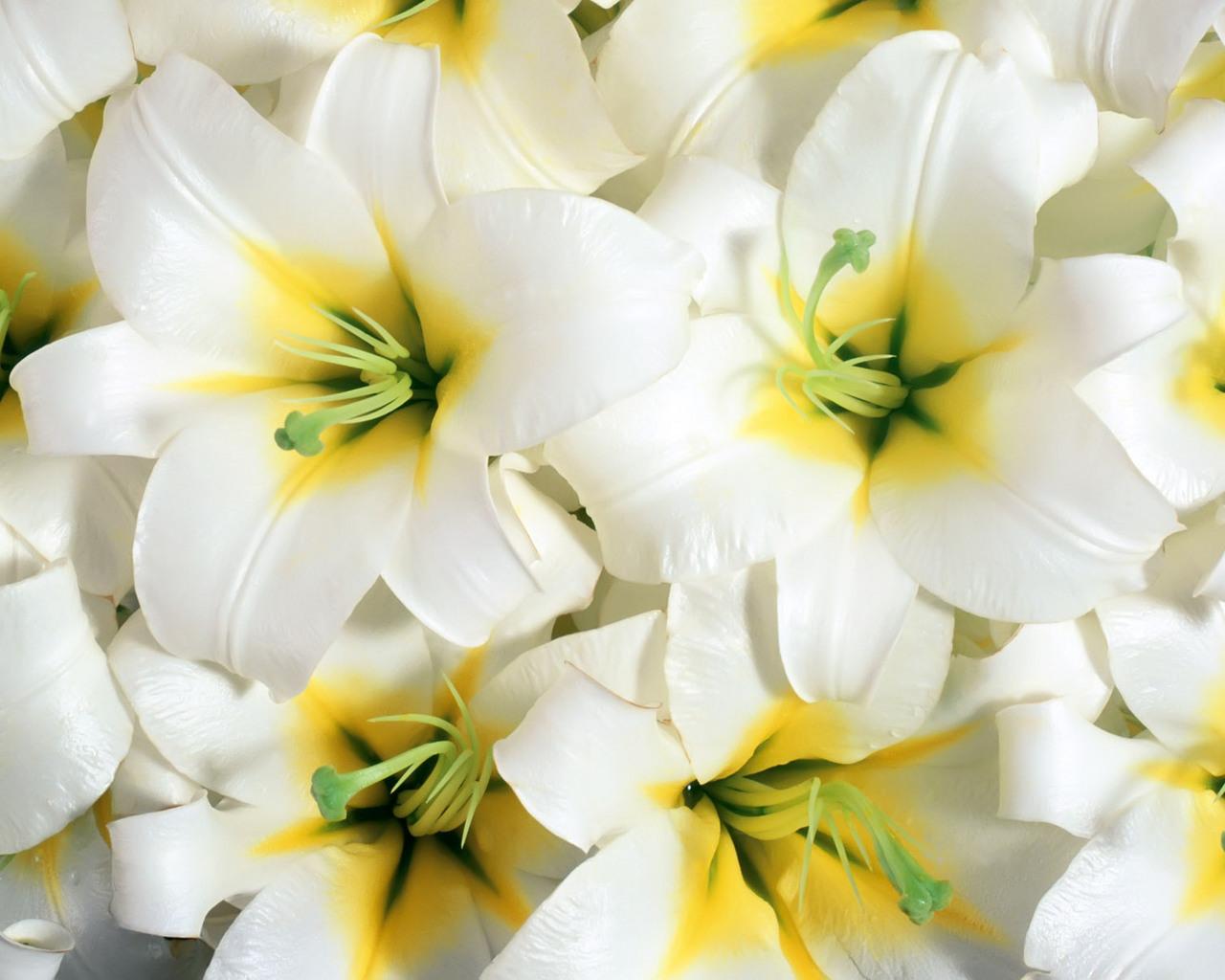 9780 descargar fondo de pantalla Plantas, Flores, Fondo: protectores de pantalla e imágenes gratis