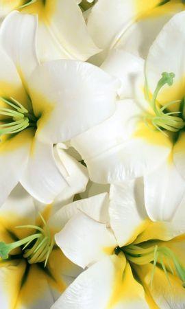 9780 скачать обои Растения, Цветы, Фон - заставки и картинки бесплатно