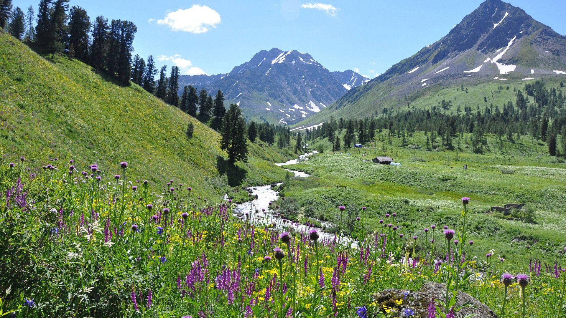 110639 скачать обои Горы, Цветы, Небо, Природа, Трава - заставки и картинки бесплатно