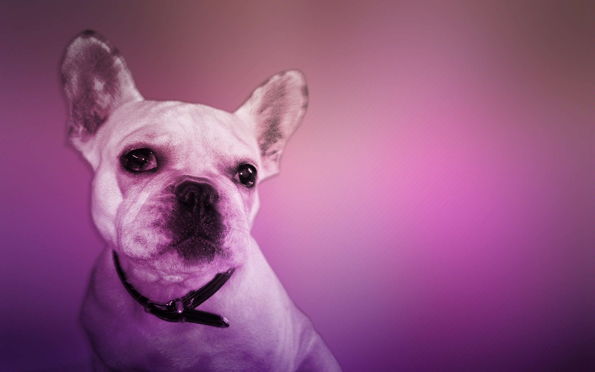 11667 download wallpaper Animals, Dogs screensavers and pictures for free
