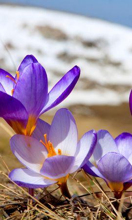 16151 descargar fondo de pantalla Plantas, Flores: protectores de pantalla e imágenes gratis