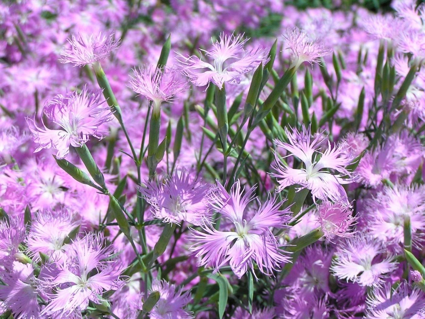 Téléchargez des papiers peints mobile Plantes, Fleurs gratuitement.