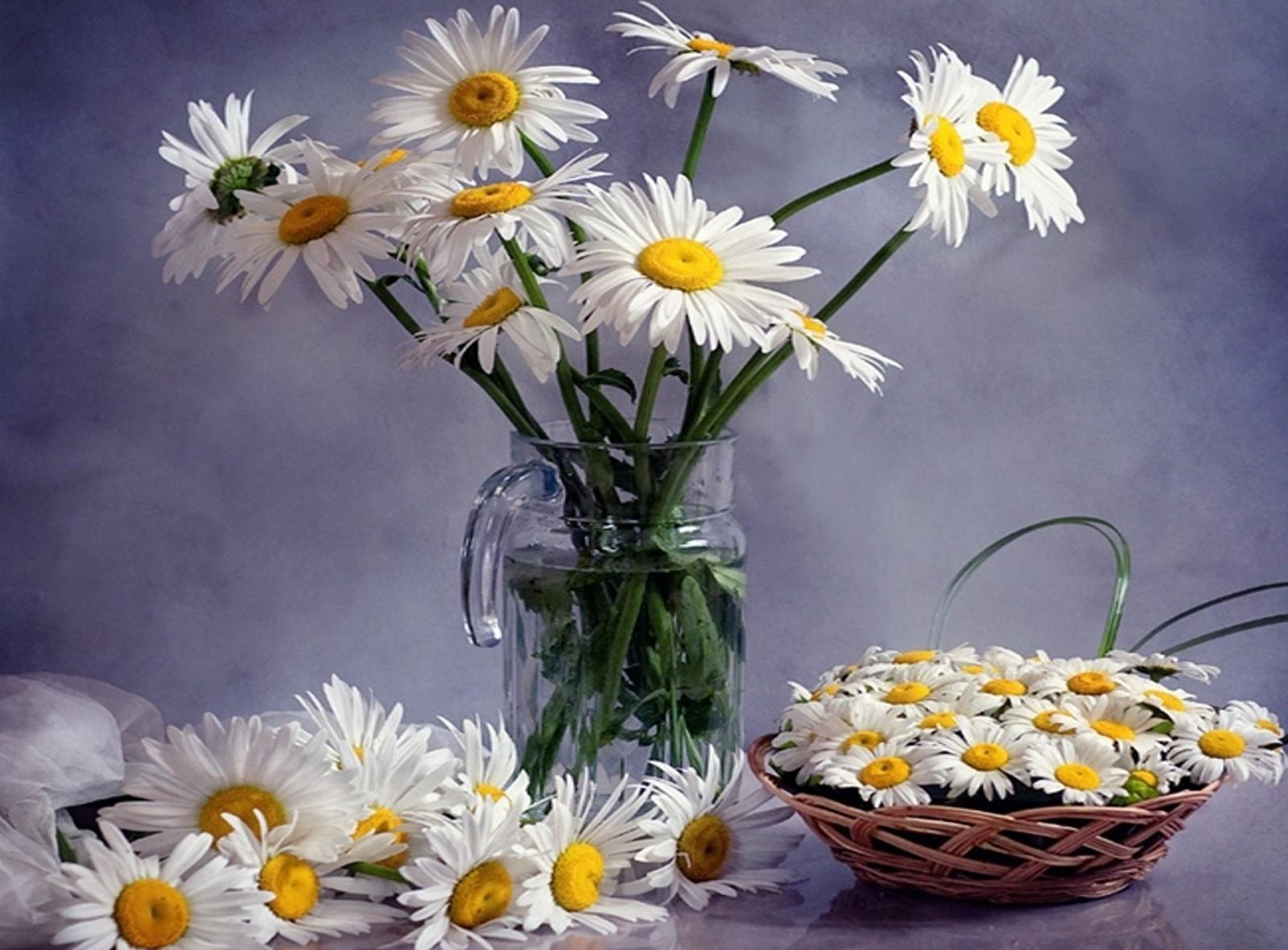 116055 télécharger le fond d'écran Fleurs, Camomille, Parcelle, Beaucoup, Cruche, Panier, Bouquets - économiseurs d'écran et images gratuitement