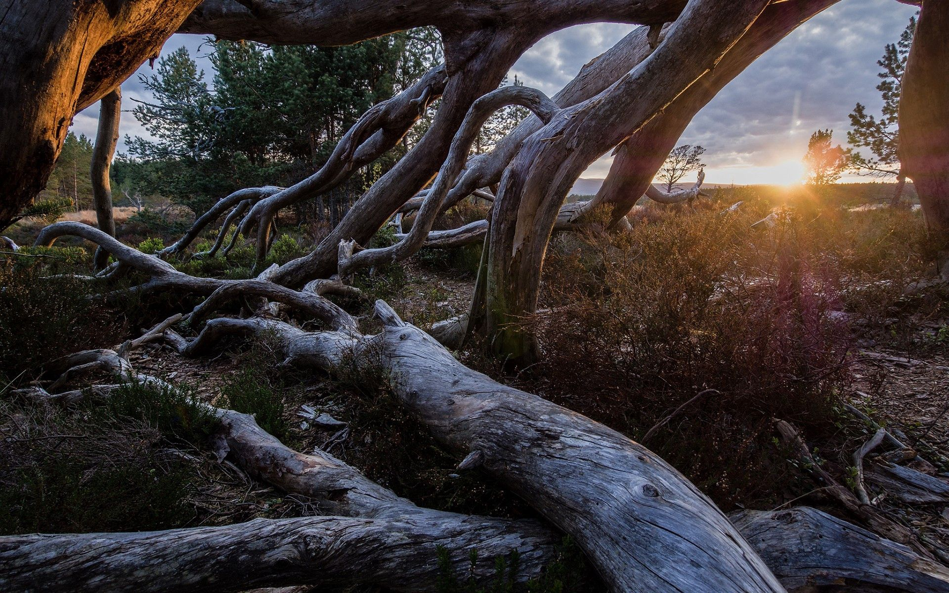 151961 download wallpaper Light, Nature, Trees, Grass, Sky, Shine screensavers and pictures for free