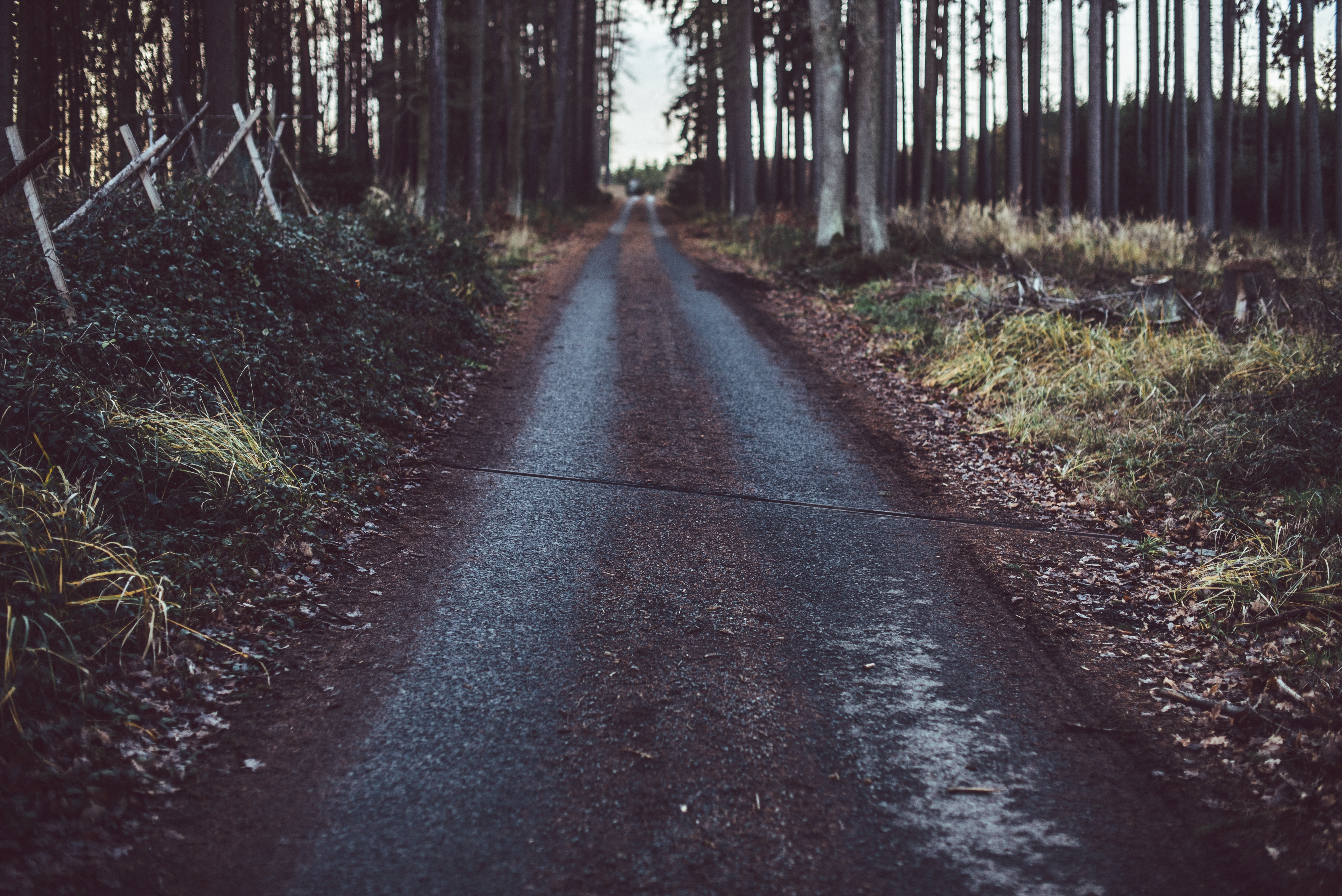 122920 Screensavers and Wallpapers Path for phone. Download Nature, Trees, Grass, Road, Path pictures for free