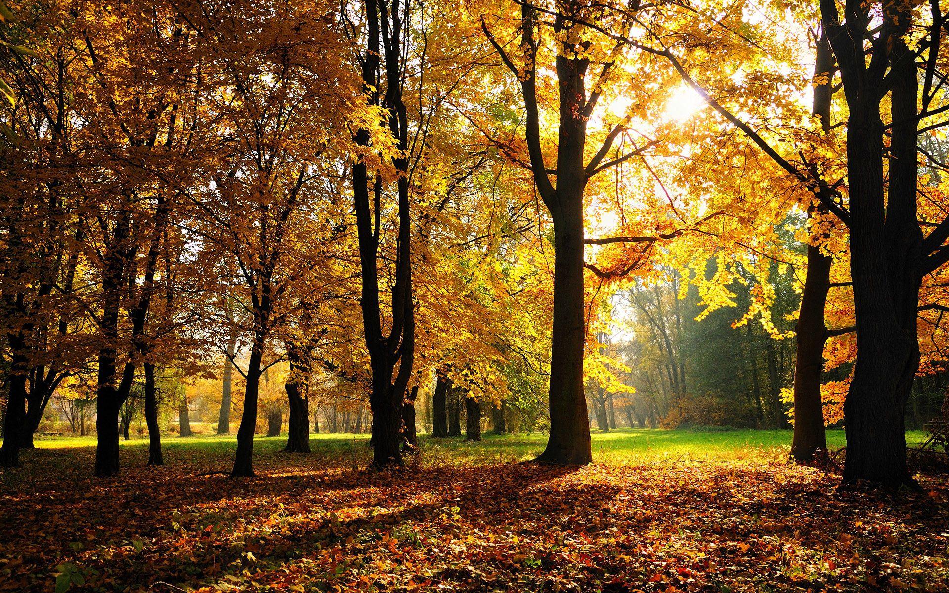 72495 завантажити шпалери Осінь, Природа, Дерева, Світло, Світлий - заставки і картинки безкоштовно